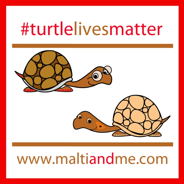 turtlelivesmatterboth